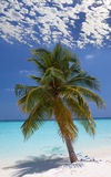 Palm tree on a sandy beach at the cyan sea. Royalty Free Stock Photos