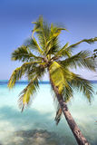Palm tree on a sandy beach at the cyan sea. Maldives. Royalty Free Stock Image