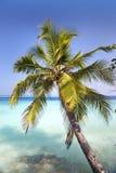Palm tree on a sandy beach at the cyan sea. Maldives. Royalty Free Stock Image