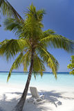 Palm tree on a sandy beach at the cyan sea. Maldives. Stock Photography