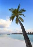 Palm tree on a sandy beach at the cyan sea. Maldives. Stock Photos