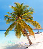 Palm tree on a sandy beach at the cyan sea. Maldives.Sea tropical landscape in a sunny day Royalty Free Stock Photo