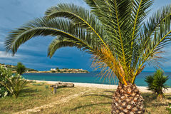 Palm tree on a sandy beach, old roman fortress in background Stock Photos