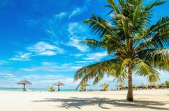 Palm tree on the sandy beach with palm tree umbrella. With blue sky Stock Photography