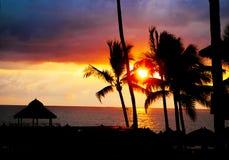 Palm tree sandy beach sunrise Stock Photos