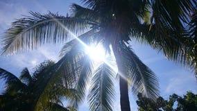 Palm tree. Scenic beach paradise holiday sun Royalty Free Stock Image