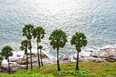 Palm tree and sea Royalty Free Stock Image