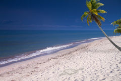 Palm tree by the sea Stock Images