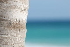 Palm tree with sea. A closeup of a palm tree trunk standing in front of the blue ocean (focus on tree Stock Photos