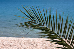 Palm tree and the sea Stock Image