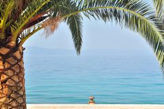 Palm tree with sea in background Stock Images