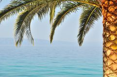 Palm tree with sea in background Stock Image