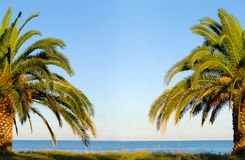 Palm tree by the sea beach Stock Photos