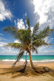 Palm tree on the sea beach. Royalty Free Stock Photography