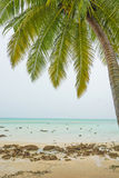 Palm tree at sea beach Stock Photo