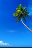 Palm tree sea and blue sky Stock Photography
