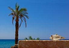 Palm-tree, sea and fish Stock Images