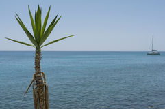 Palm Tree And Sea Royalty Free Stock Photography