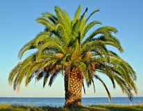Palm tree by the sea shore beach stock photos