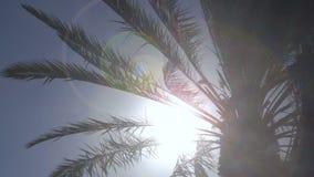Palm tree - seamless loop. Palm tree leaves in the wind - seamless loop stock video