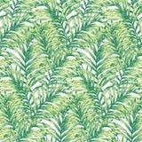 Palm Tree Seamless Pattern Royalty Free Stock Photography