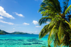 Palm Tree and Seascape Royalty Free Stock Photos
