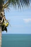 Palm tree seascape background koh samui royalty free stock images