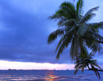 Palm tree and seascape Royalty Free Stock Images