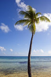 Palm tree on the seashore and the blue sky with clouds Stock Photography