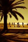 Palm tree on a seashore Stock Image