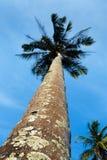 Palm tree on the seashore Stock Photography