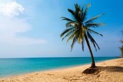 Palm tree on the seashore Royalty Free Stock Photo