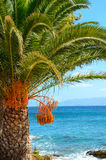 Palm tree at the seaside stock images