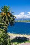Palm tree on seaside Stock Image