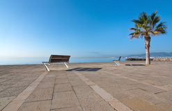 Palm tree and seaside seat Stock Image