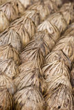 Palm Tree Seeds. Closeup abstract of lines of dried palm tree seeds stock photography