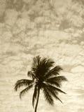 Palm tree in sepia tone. Brazil Stock Photo