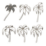 Palm tree set colorless vector illustration Royalty Free Stock Image