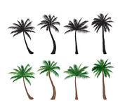 Palm tree set Nature floral design elements Tropical plant trees Royalty Free Stock Images
