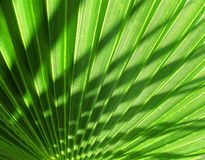Palm tree shade Royalty Free Stock Photo