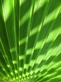 Palm tree shade Stock Photo