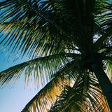 Palm tree shade royalty free stock images