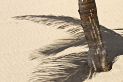 Palm tree shadow Royalty Free Stock Photography