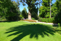 Palm Tree Shadow. On Lawn in Gardens Royalty Free Stock Photography