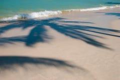 Free Palm Tree Shadow Royalty Free Stock Image - 37358526