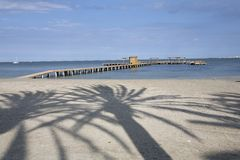 Palm tree shadow Stock Photos