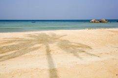 Palm tree shadow on beach Stock Images