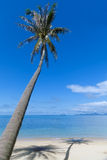 Palm tree with shadow on the beach sand Stock Image
