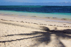 Palm tree shadow on the beach Stock Photography