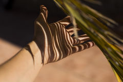 Palm tree shadow over a hand of a woman. abstract concept Royalty Free Stock Images